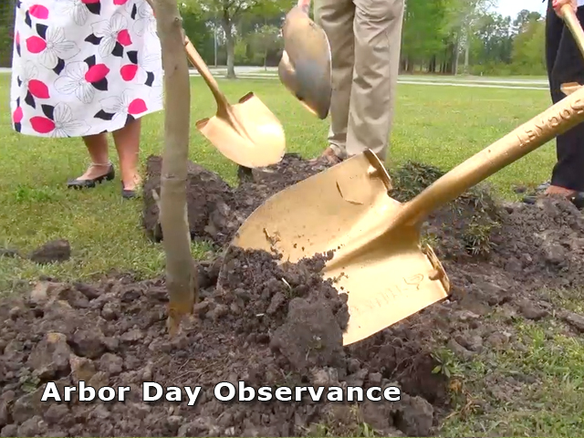 Jacksonville nc official website arbor day for Tarawa terrace 2
