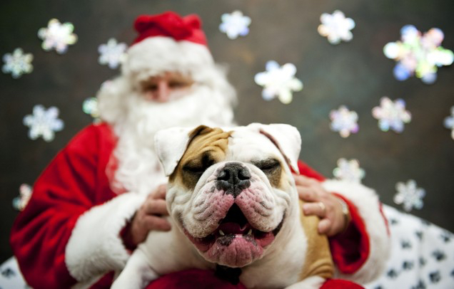 have your pet's photo taken with santa