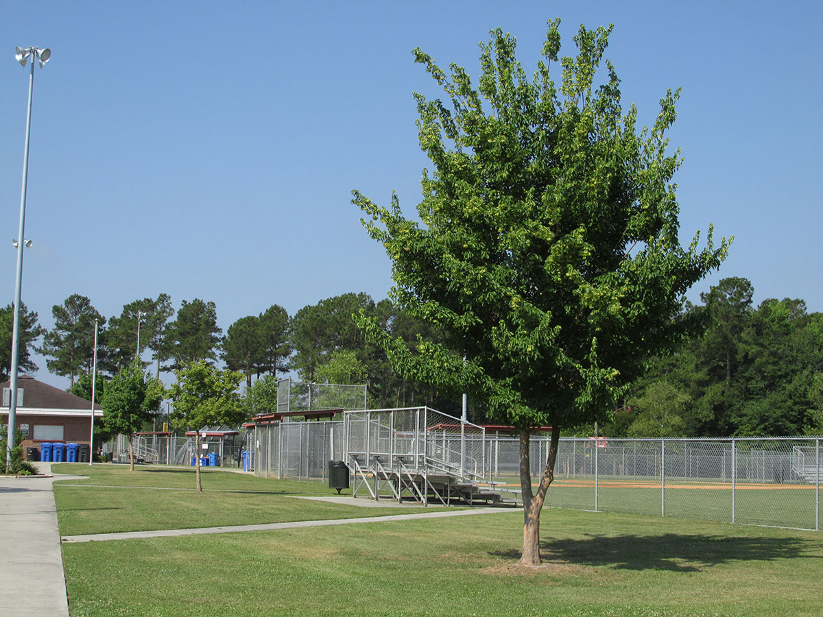 Jacksonville Commons Ballfields